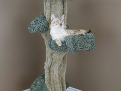 5 Awesome Cat Trees That Look like Trees