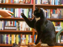 11 Easy Cat Tricks to Teach Your Cat Today