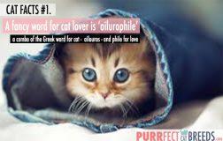 Cat Facts #1. Ailurophile