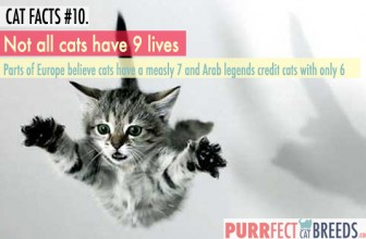 Cat Facts #10. Cats Don't Always Have 9 Lives