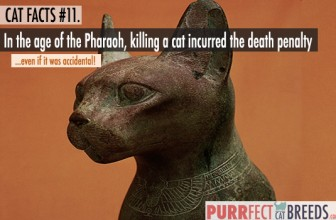 Cat Facts #11. The Death Penalty for Killing a Cat