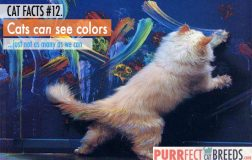 Cat Facts #12. Cats are Only Partially Colorblind
