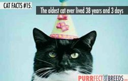 Cat Facts #15. The Oldest Cat Ever Lived Longer than Jesus