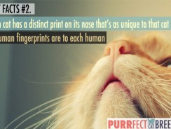 Cat Facts #2. Noseprints and Fingerprints