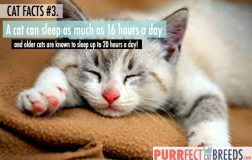 Cat Facts #3. Cats and the Art of Sleeping