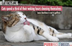 Cat Facts #4. A Clean Cat is a Happy Cat