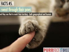 Cat Facts #5. Cats Sweat Through Their Paws