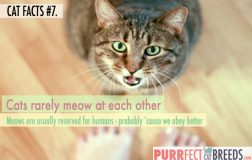 Cat Facts #7. The Cat's Meow…is Mostly for You