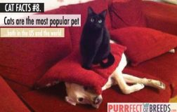 Cat Facts #8. Cats are the Most Popular Pet