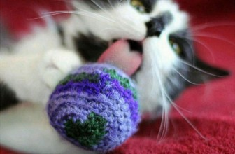 7 Coolest Catnip Toys Every Kitty Should Have