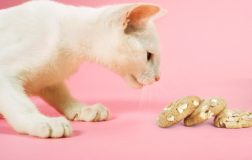 What Human Foods Can Cats Eat? 5 Human Food for Cats