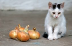 Dangerous Foods for Cats: 7 Harmful Foods Your Cat Should Never Eat