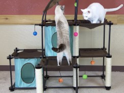 Best Cheap Cat Trees and Towers Under $50