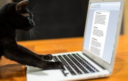 6 Funniest Cat Books Ever Written by a Cat