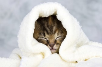 8 Clever Home Remedies for Cat Colds