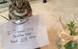 How to Discipline a Cat…Yes, It Can Be Done