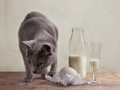 How to Keep Cats Off Counters and Furniture Using Things Cats Hate