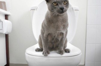 How to Train a Cat to Use the Toilet