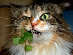 Everything You Ever Wanted to Know About Catnip