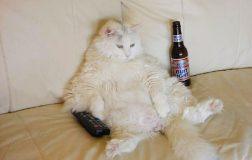 Lazy Cat Breeds