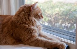 Best Cat Toys for Indoor Cats: What You Need to Know