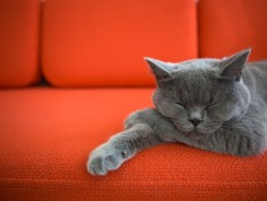 What Does it Mean When a Cat Purrs?