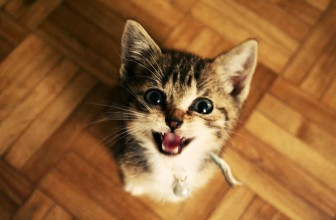 Why Do Cats Meow? 10 Things Your Cat is Trying to Tell You